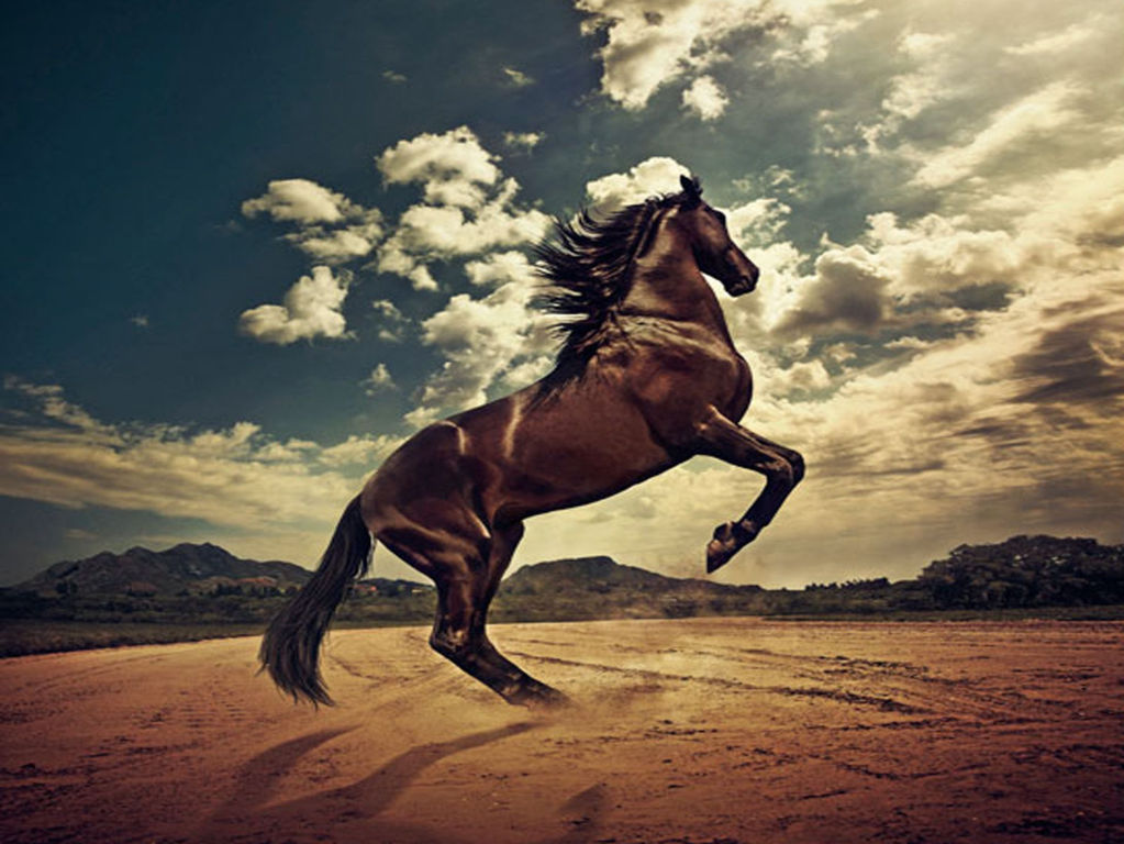 Horse Wallpaper 013