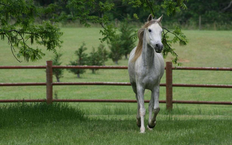 Horse Wallpaper 015