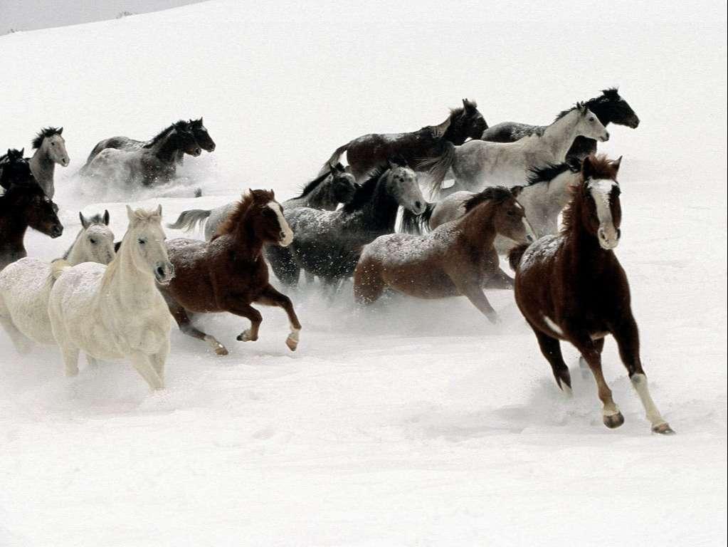 Horse Wallpaper 020