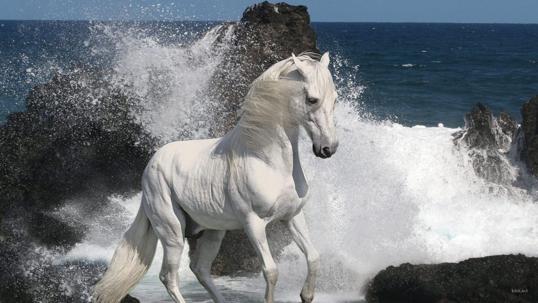 Horse Wallpaper 031