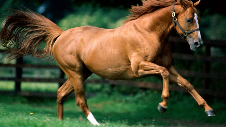 Horse Wallpaper 032