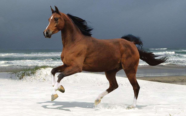 Horse Wallpaper 041