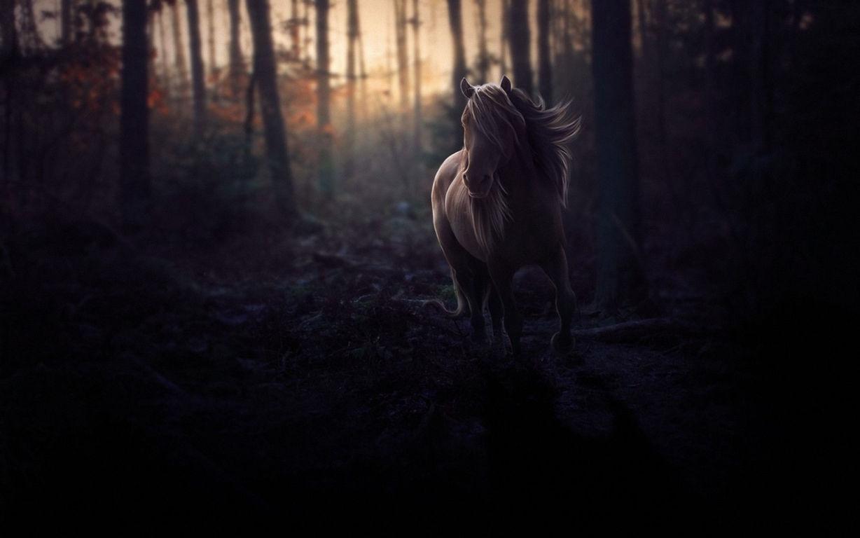 Horse Wallpaper 047