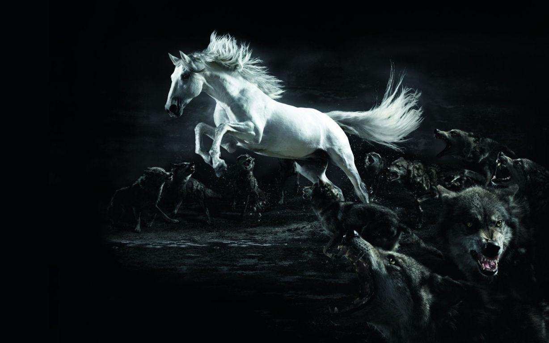 Horse Wallpaper 048