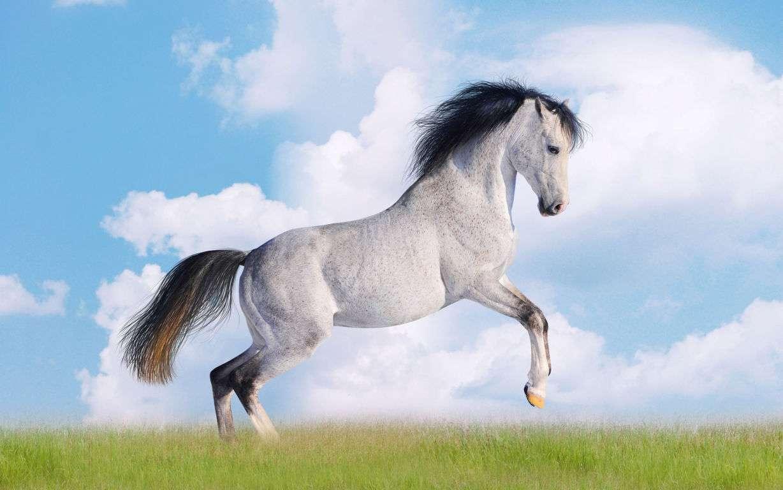 Horse Wallpaper 067
