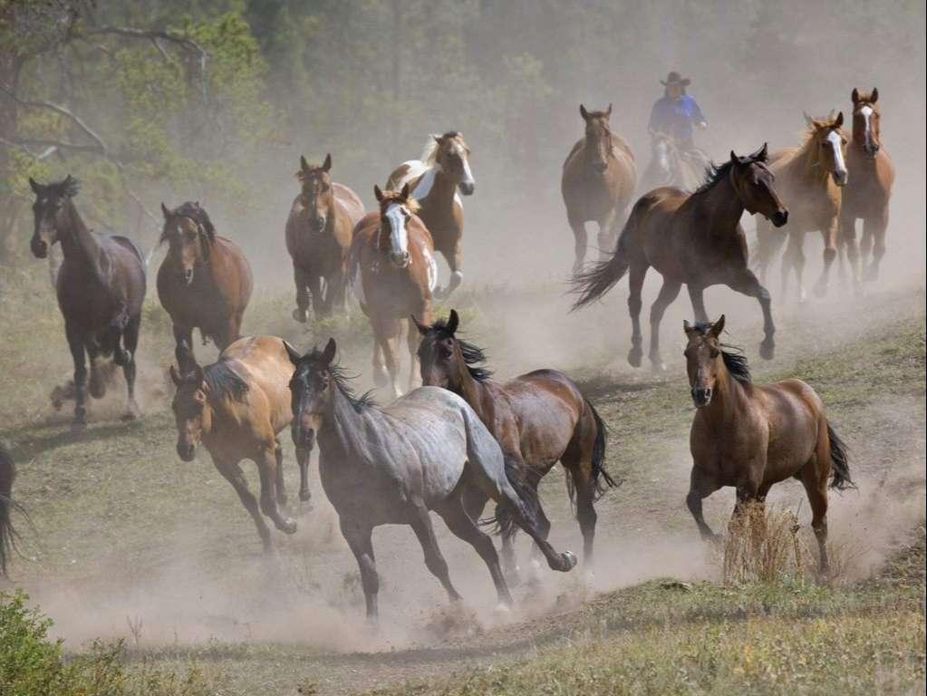 Horse Wallpaper 070