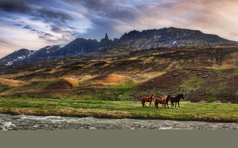 Horse Wallpaper 078