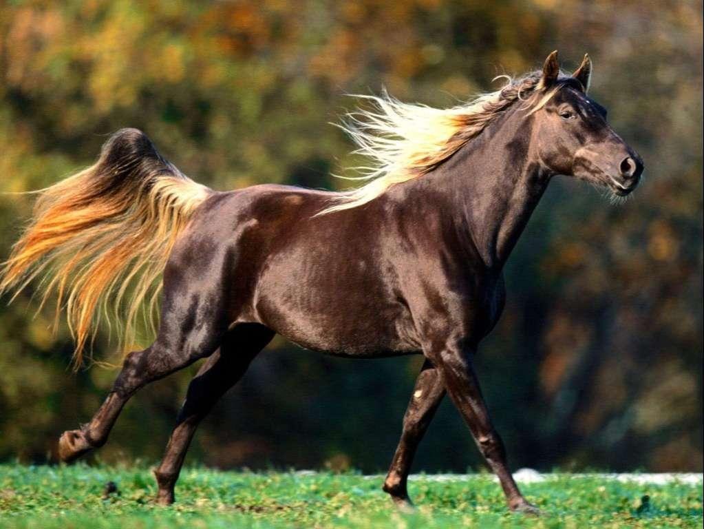 Horse Wallpaper 080