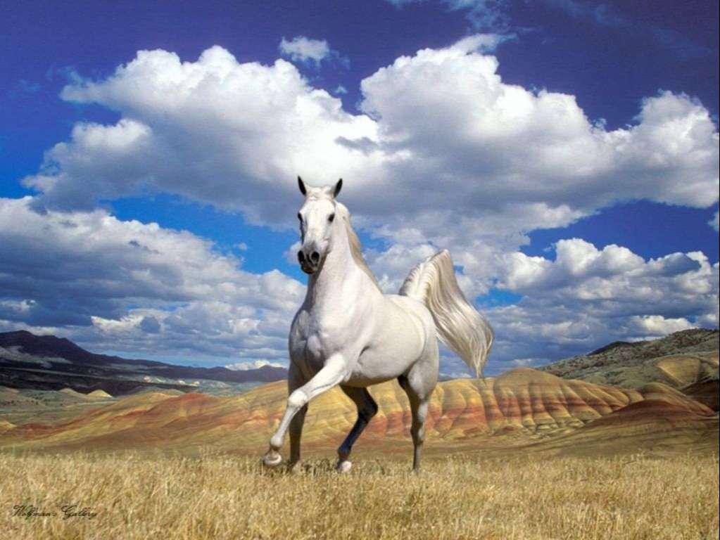 Horse Wallpaper 085