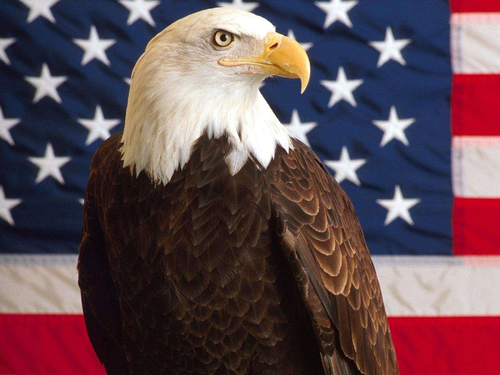 American Flag Eagle Wallpaper 009