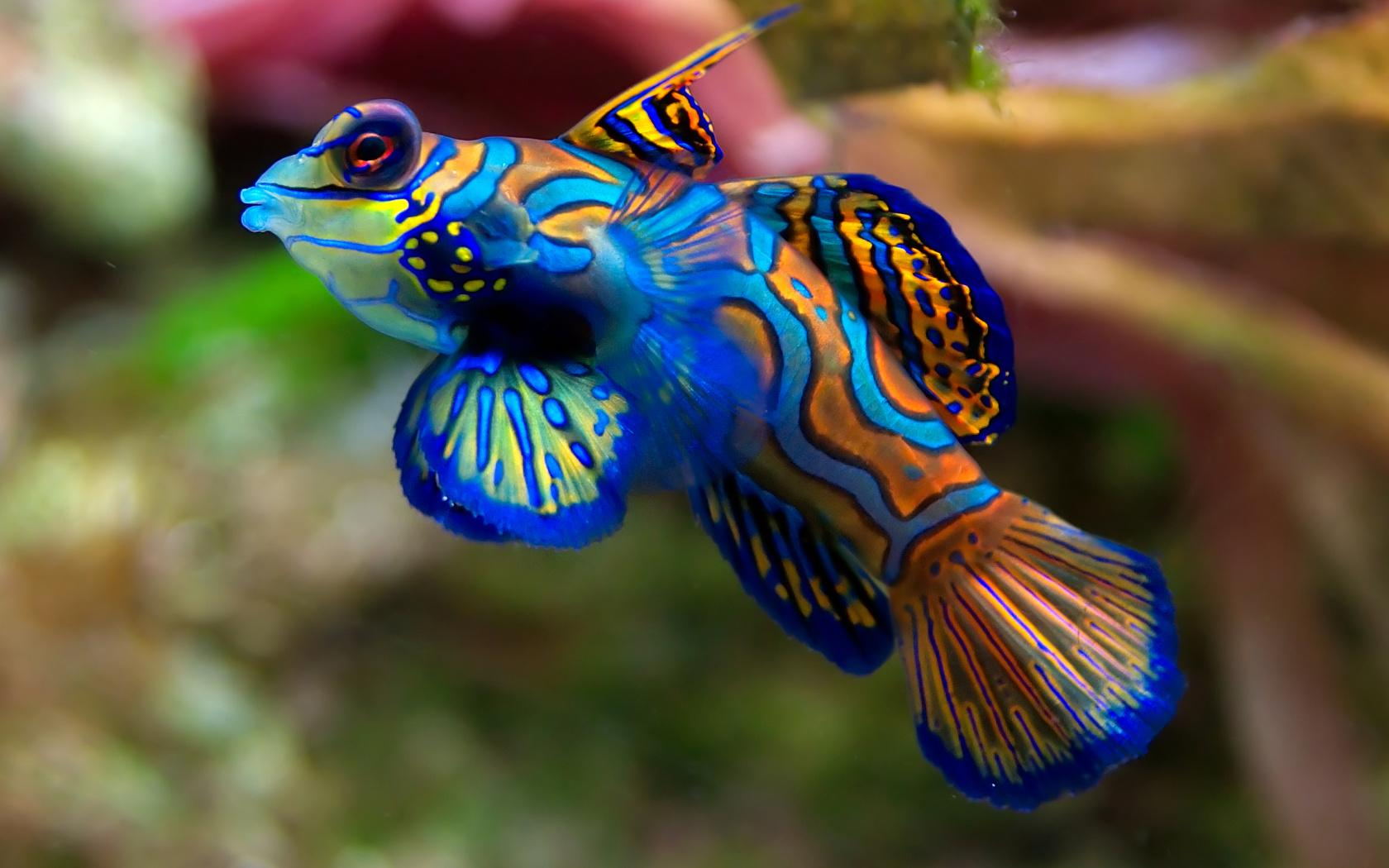 Fish Wallpaper 003
