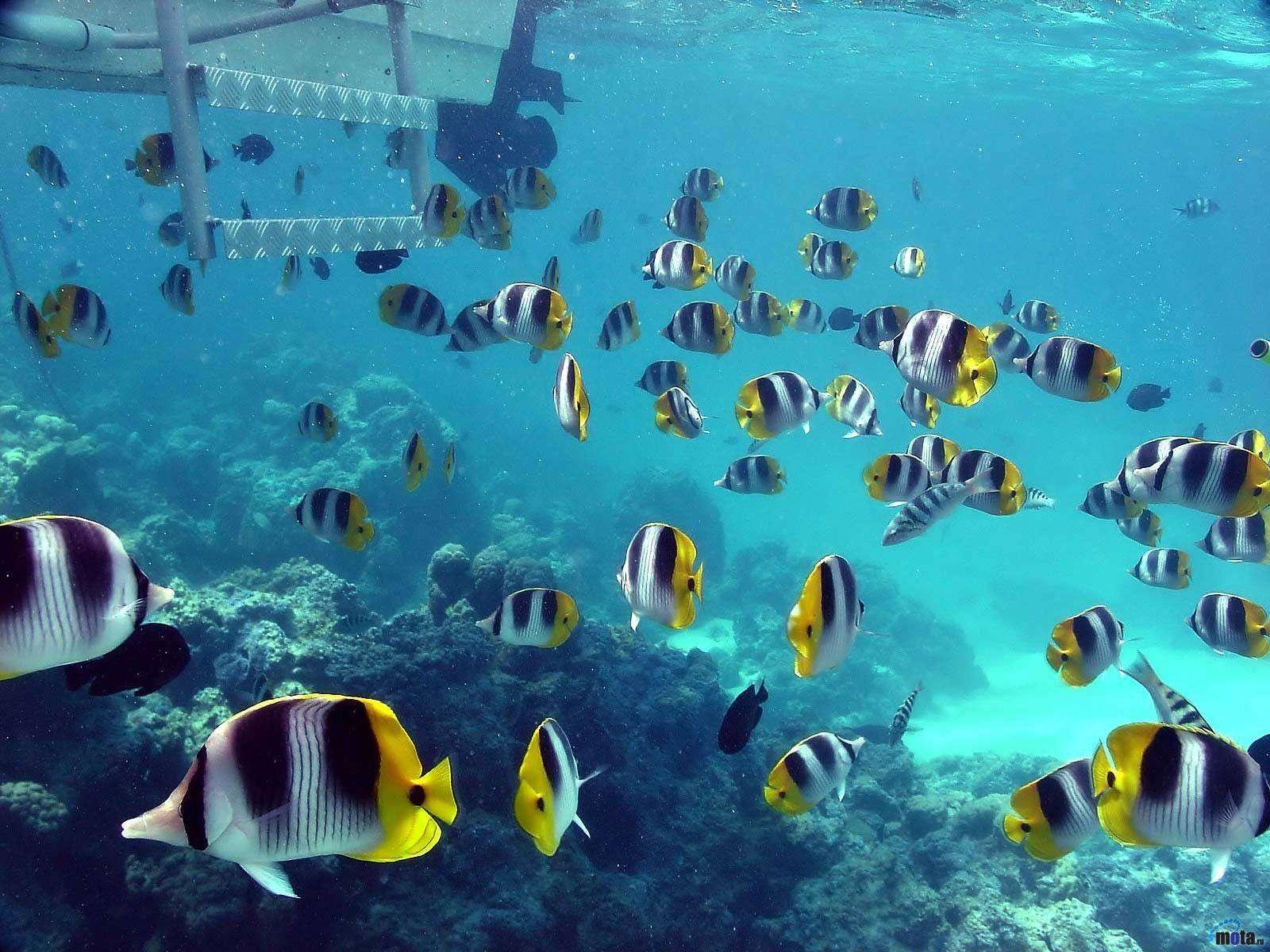 Fish Wallpaper 006