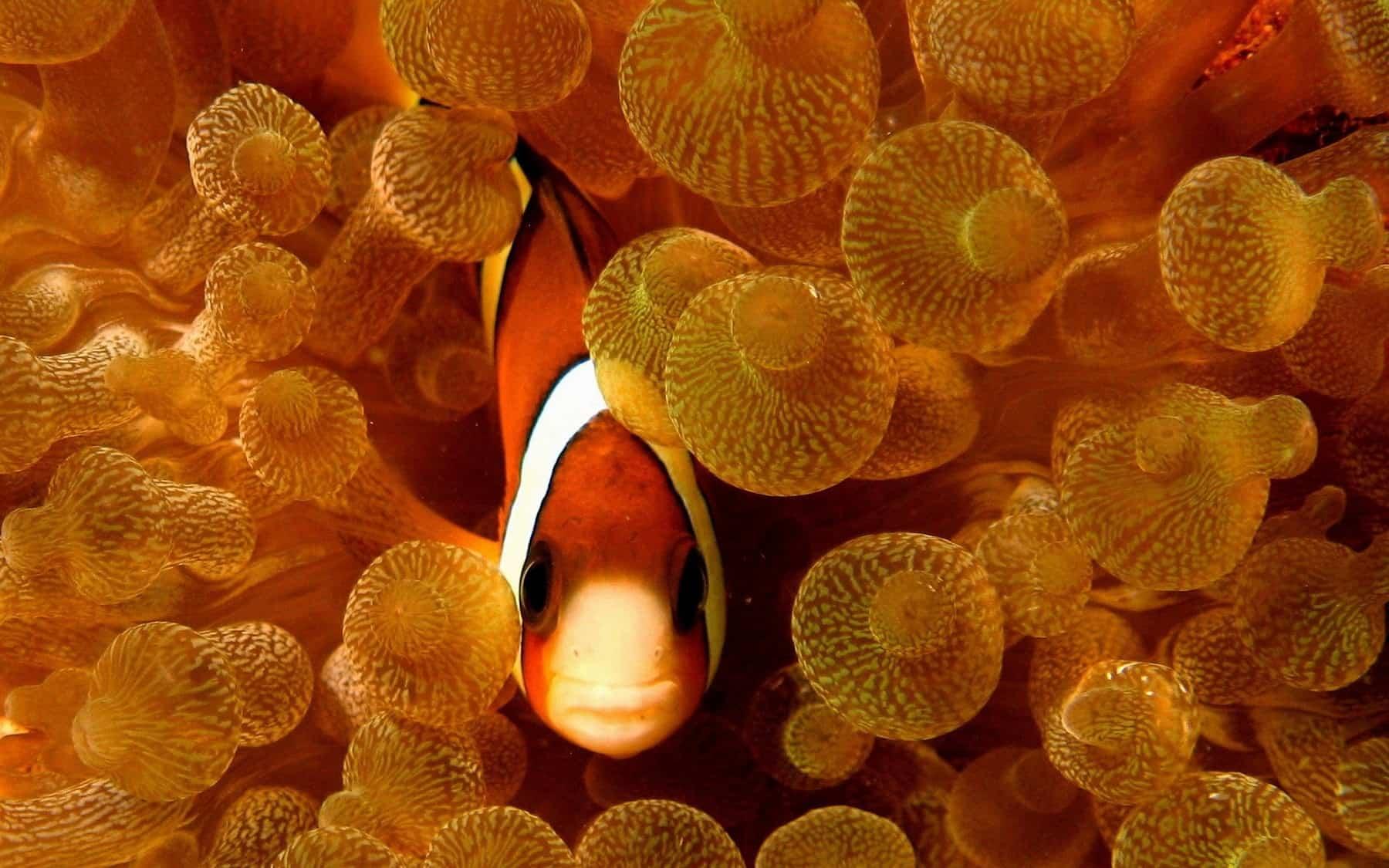 Fish Wallpaper 008
