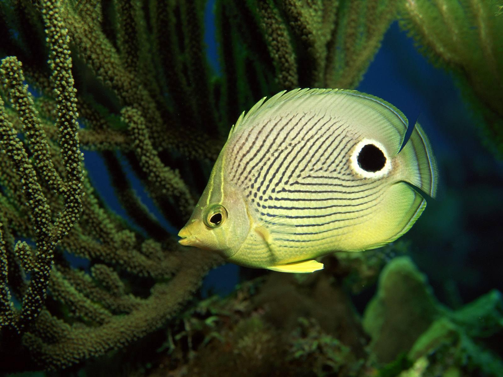Fish Wallpaper 015