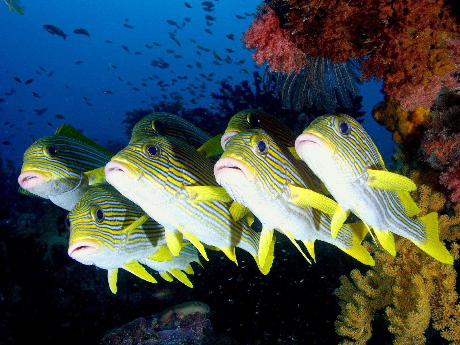 Fish Wallpaper 018
