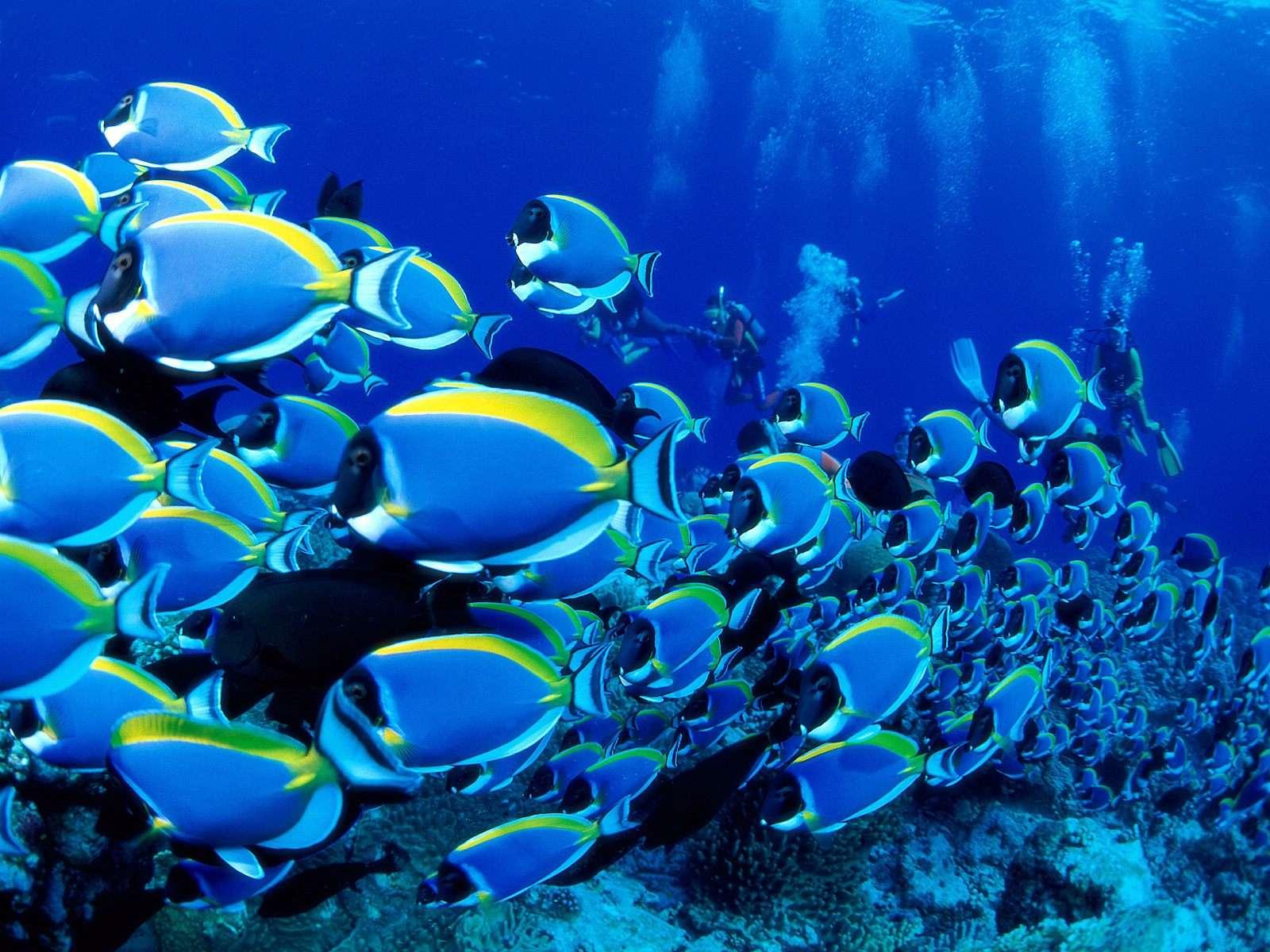 Fish Wallpaper 022