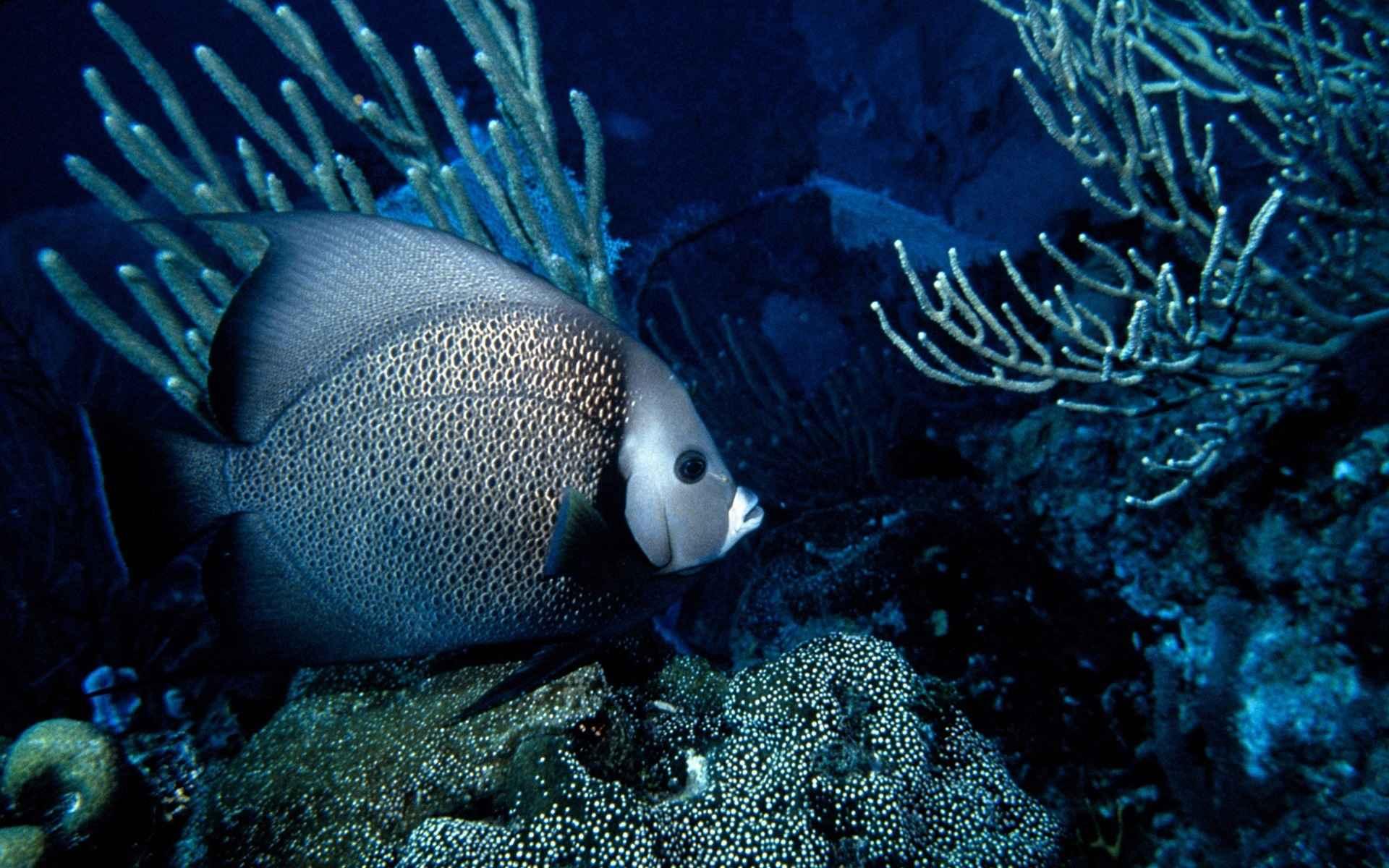 Fish Wallpaper 023