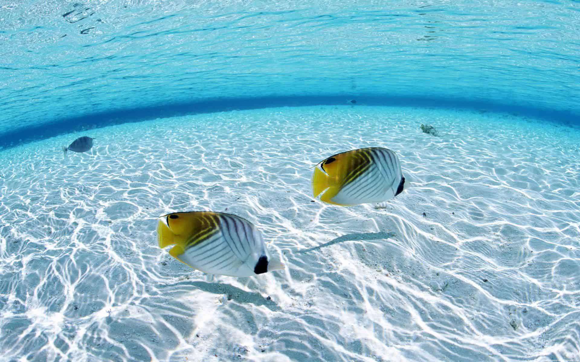 Fish Wallpaper 036