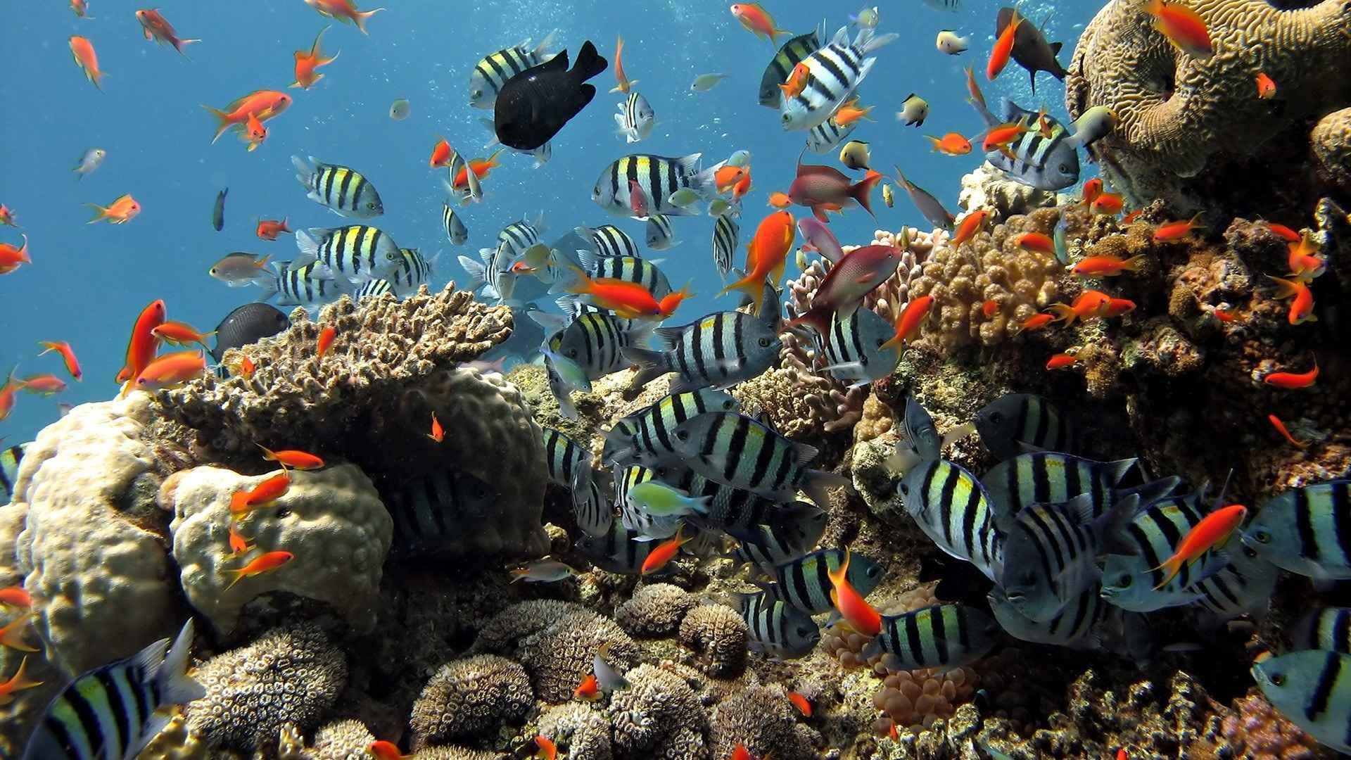 Fish Wallpaper 041