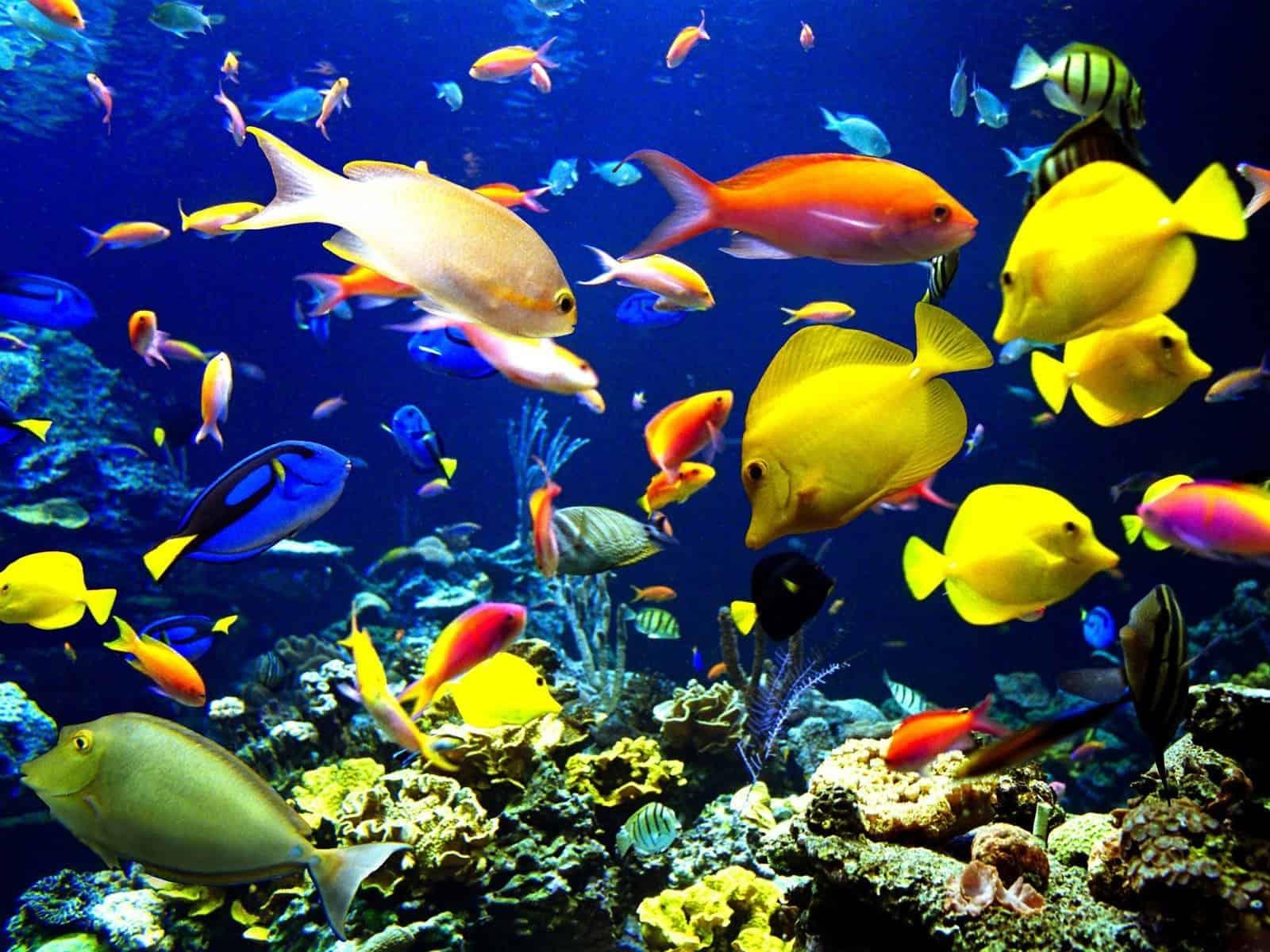 Fish Wallpaper 045