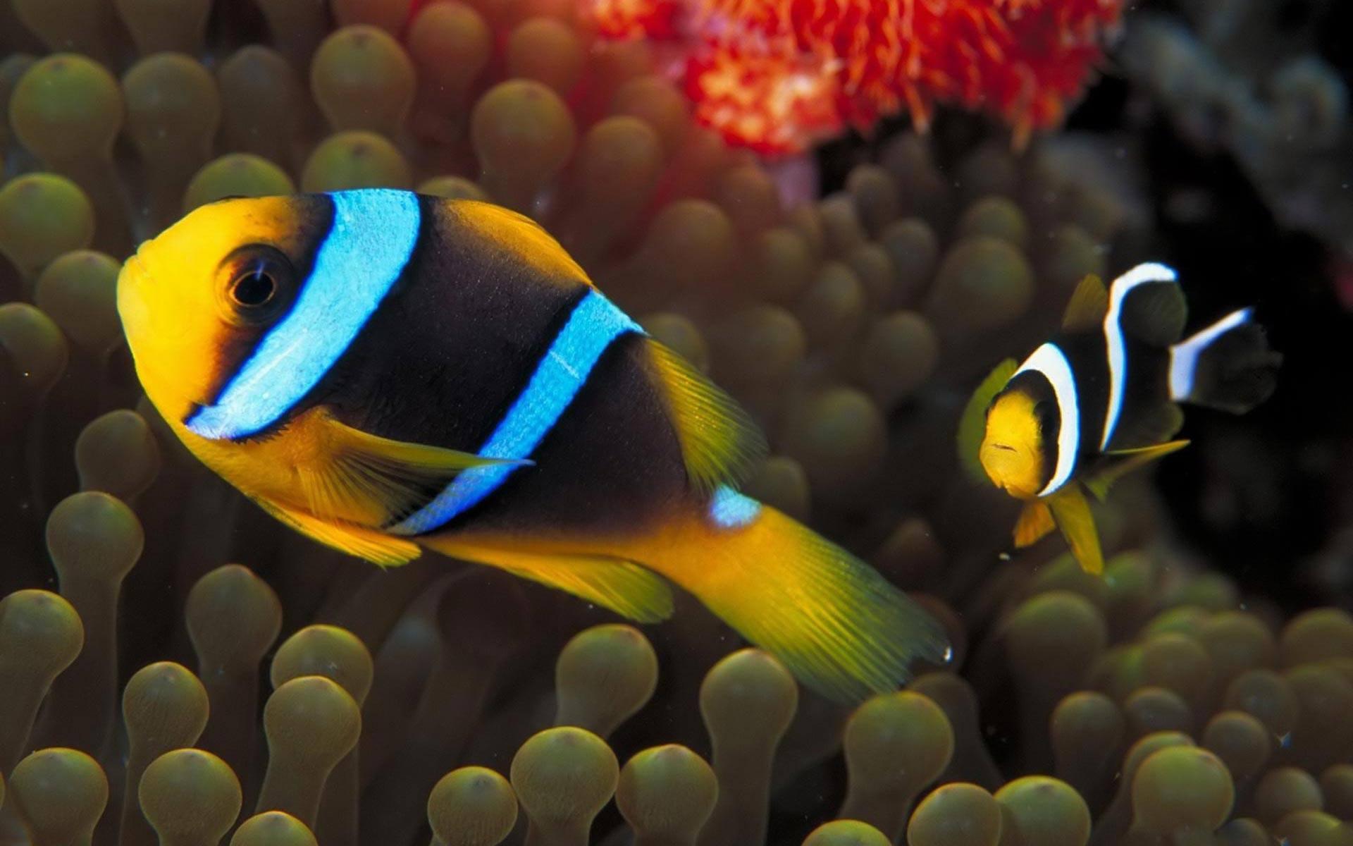 Fish Wallpaper 048