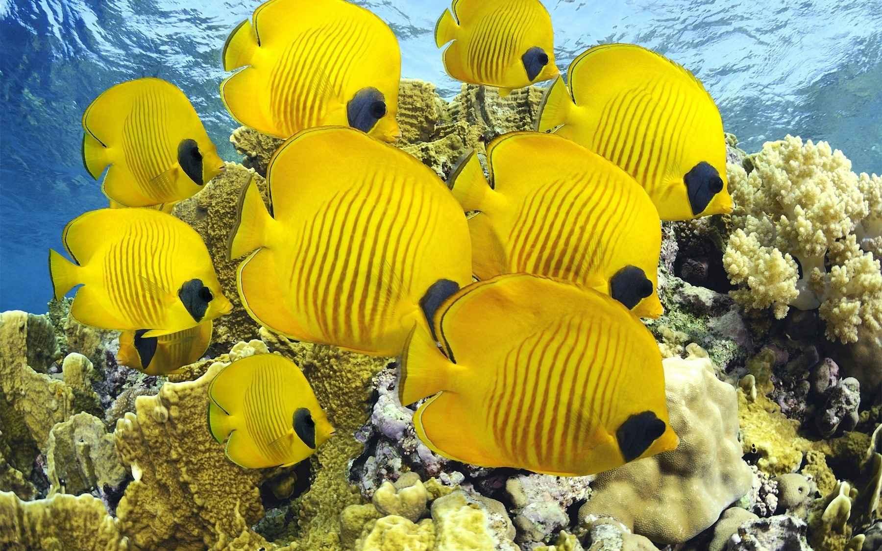 Fish Wallpaper 049