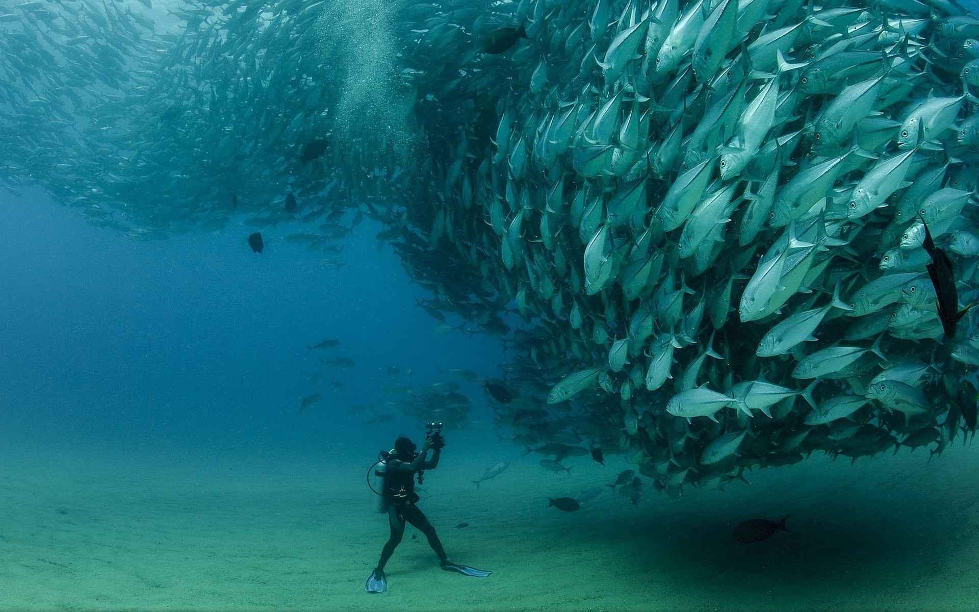 Fish Wallpaper 056