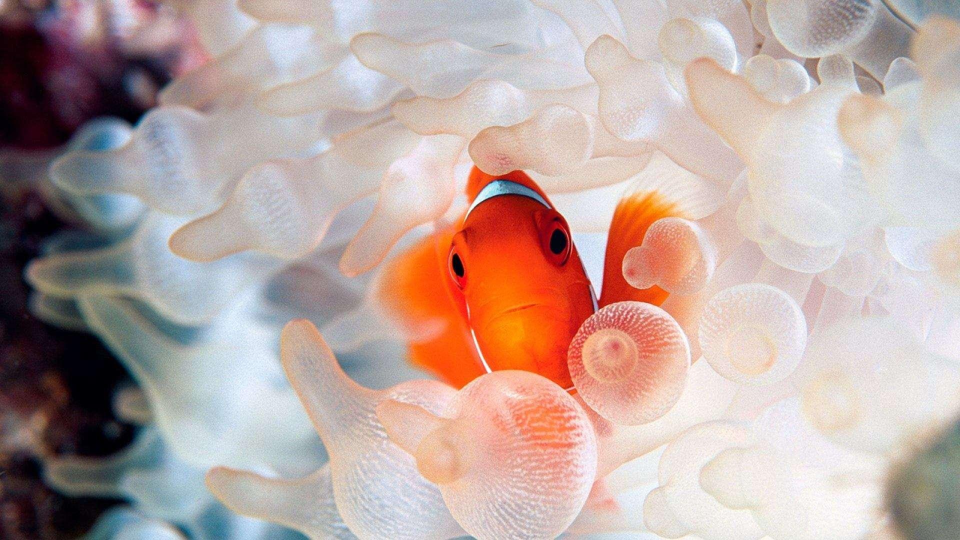 Fish Wallpaper 062