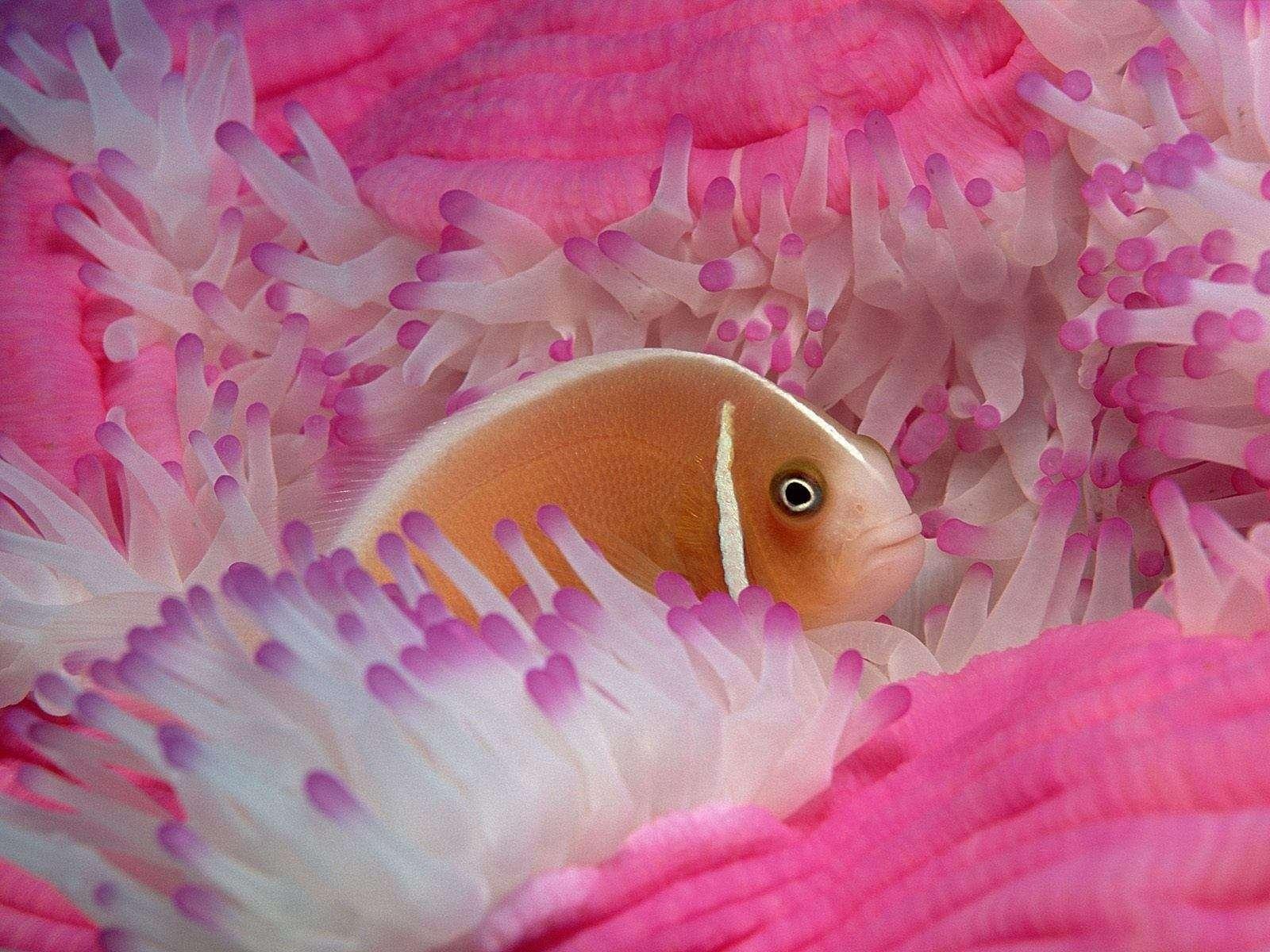 Fish Wallpaper 082