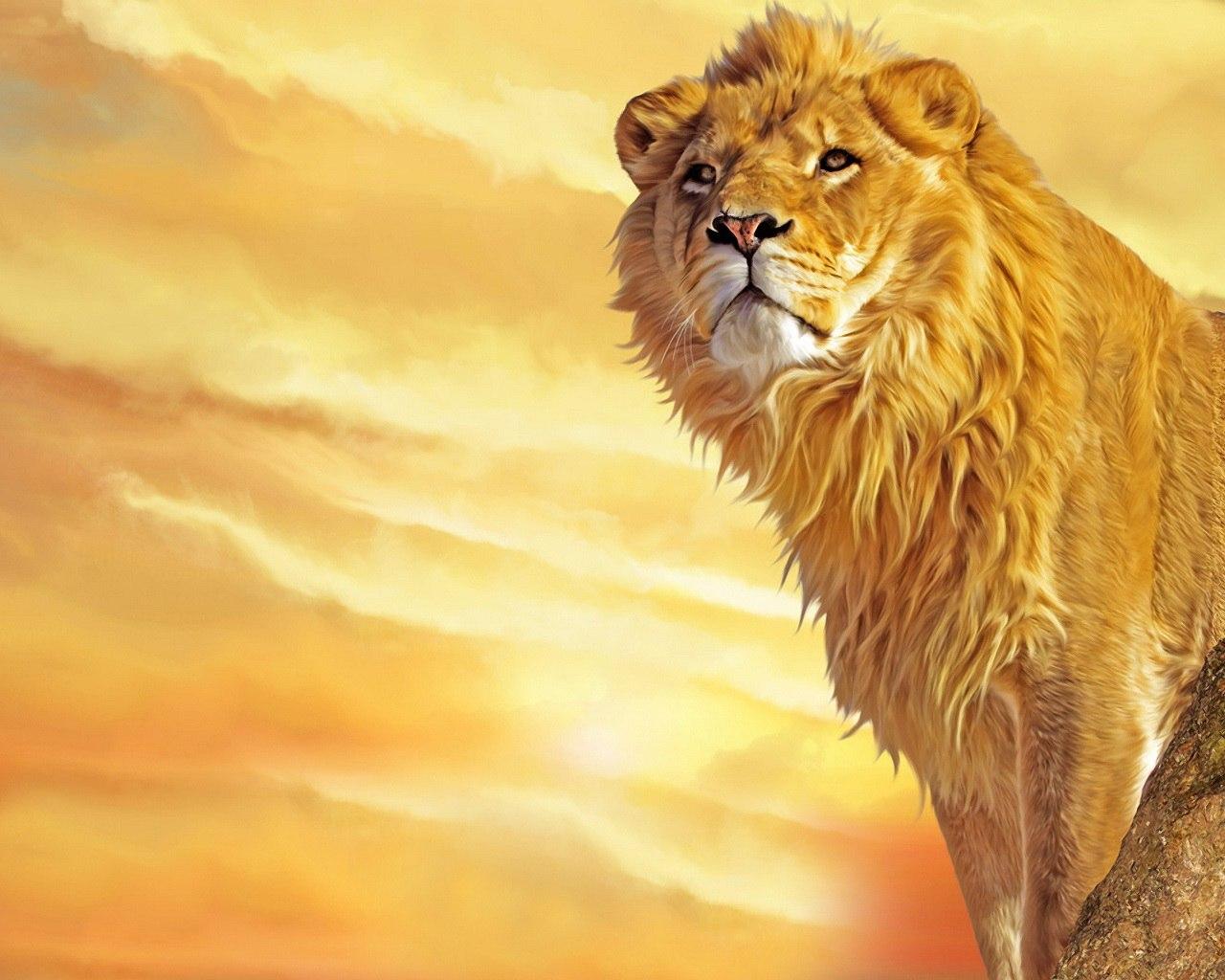 Lion Wallpaper 008