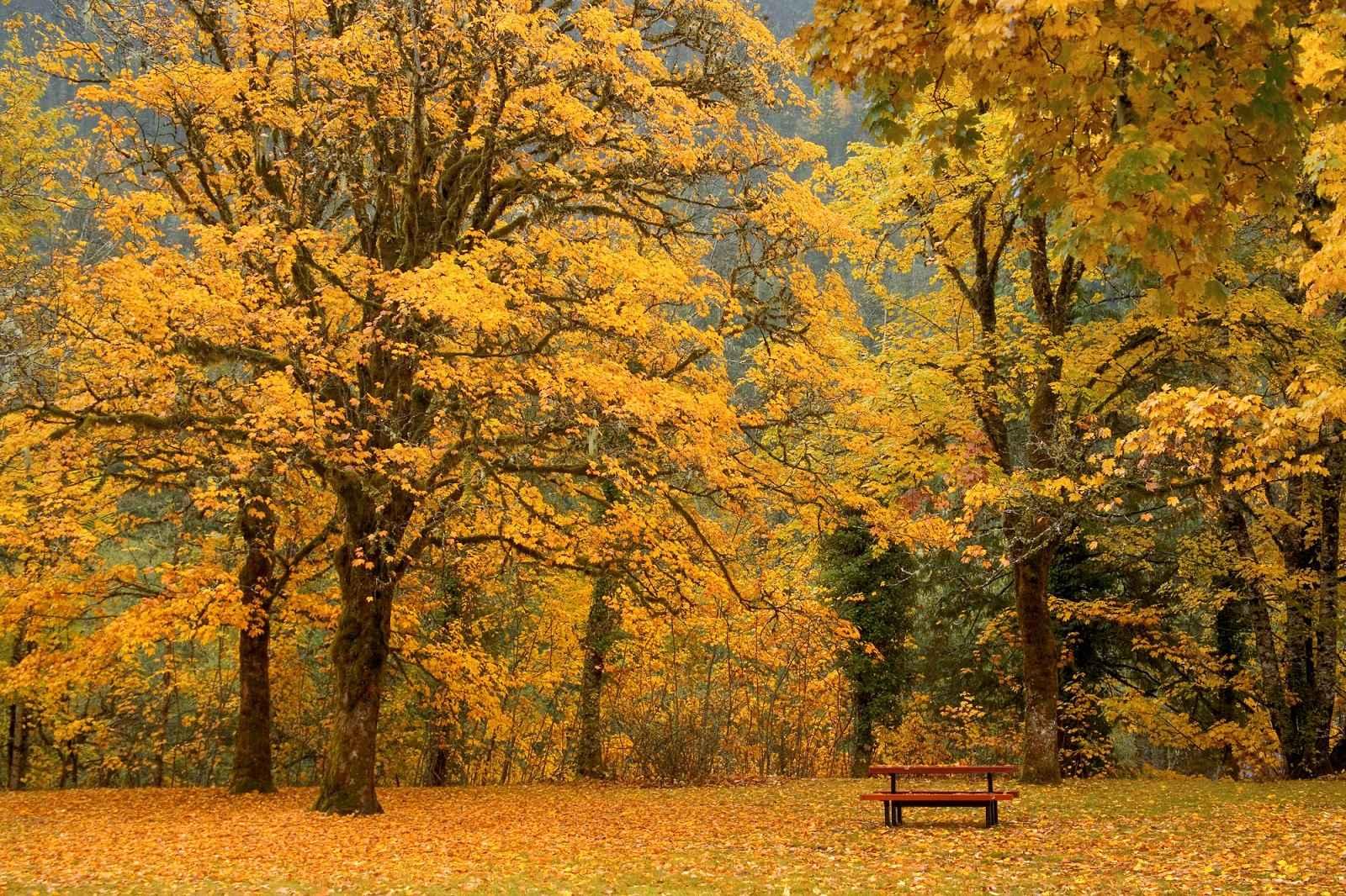 Trees Wallpaper 023