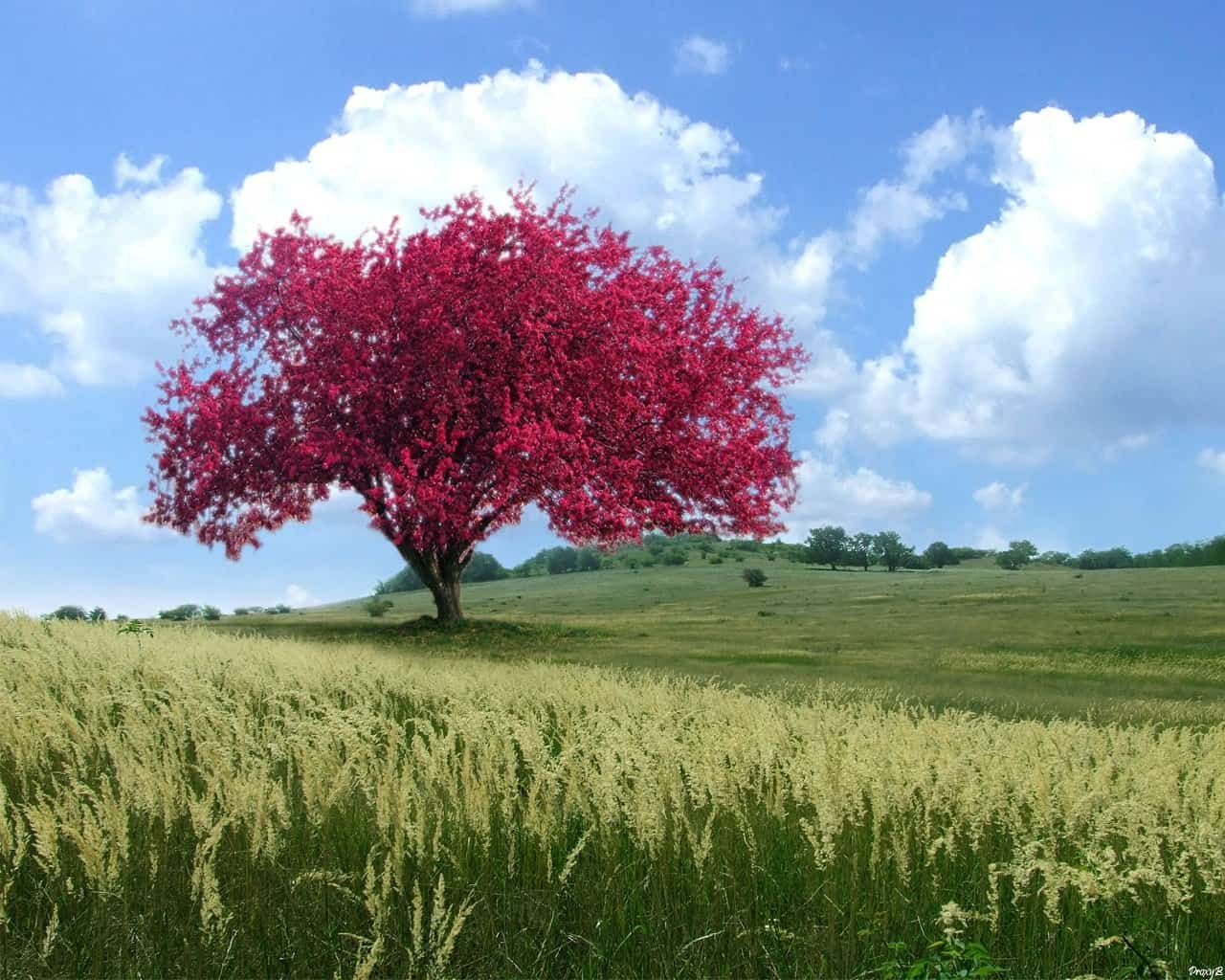 Trees Wallpaper 036
