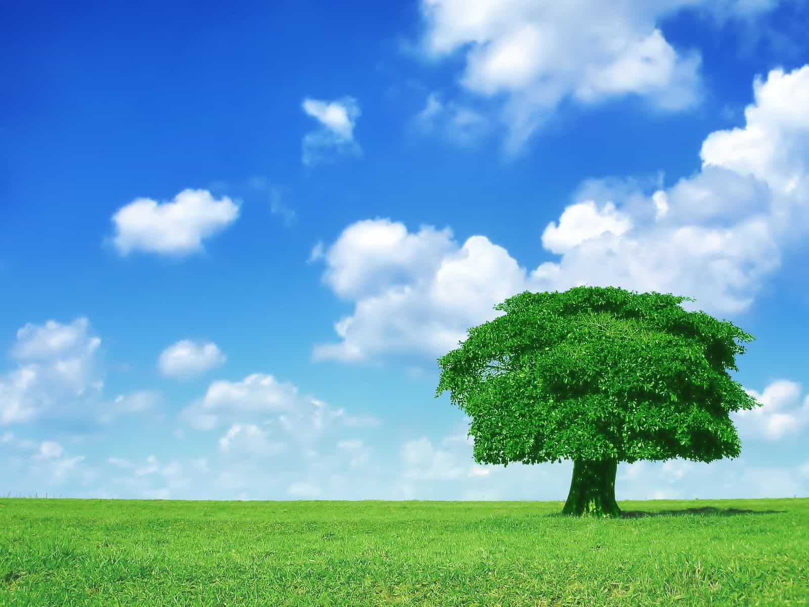 Trees Wallpaper 046