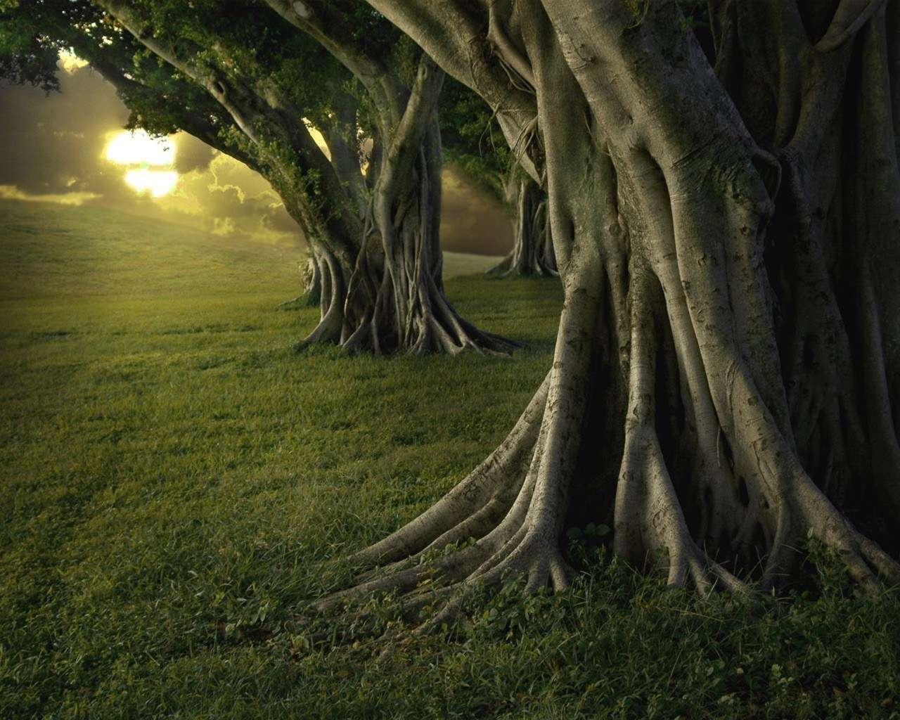 Trees Wallpaper 056