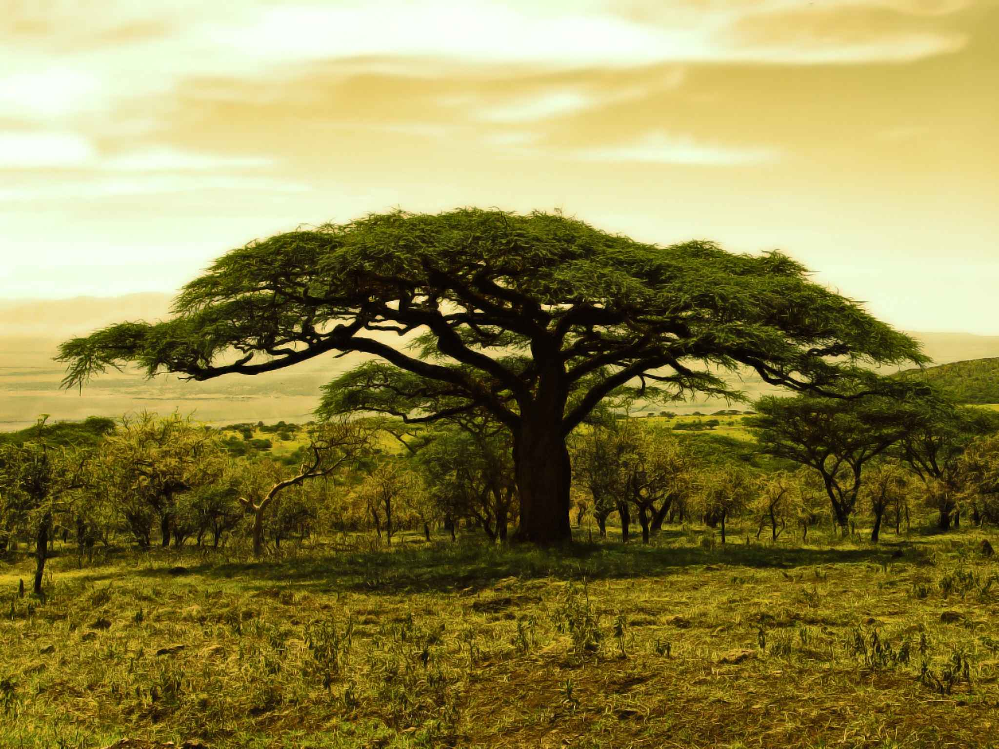 Trees Wallpaper 059