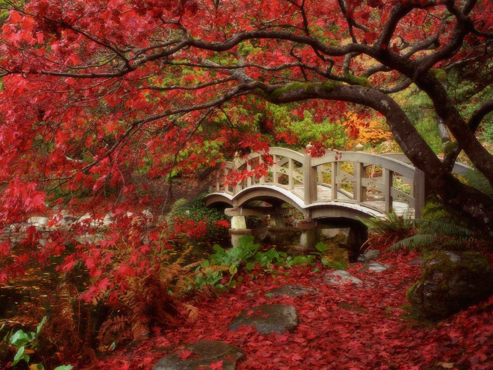 Autumn Wallpaper 007