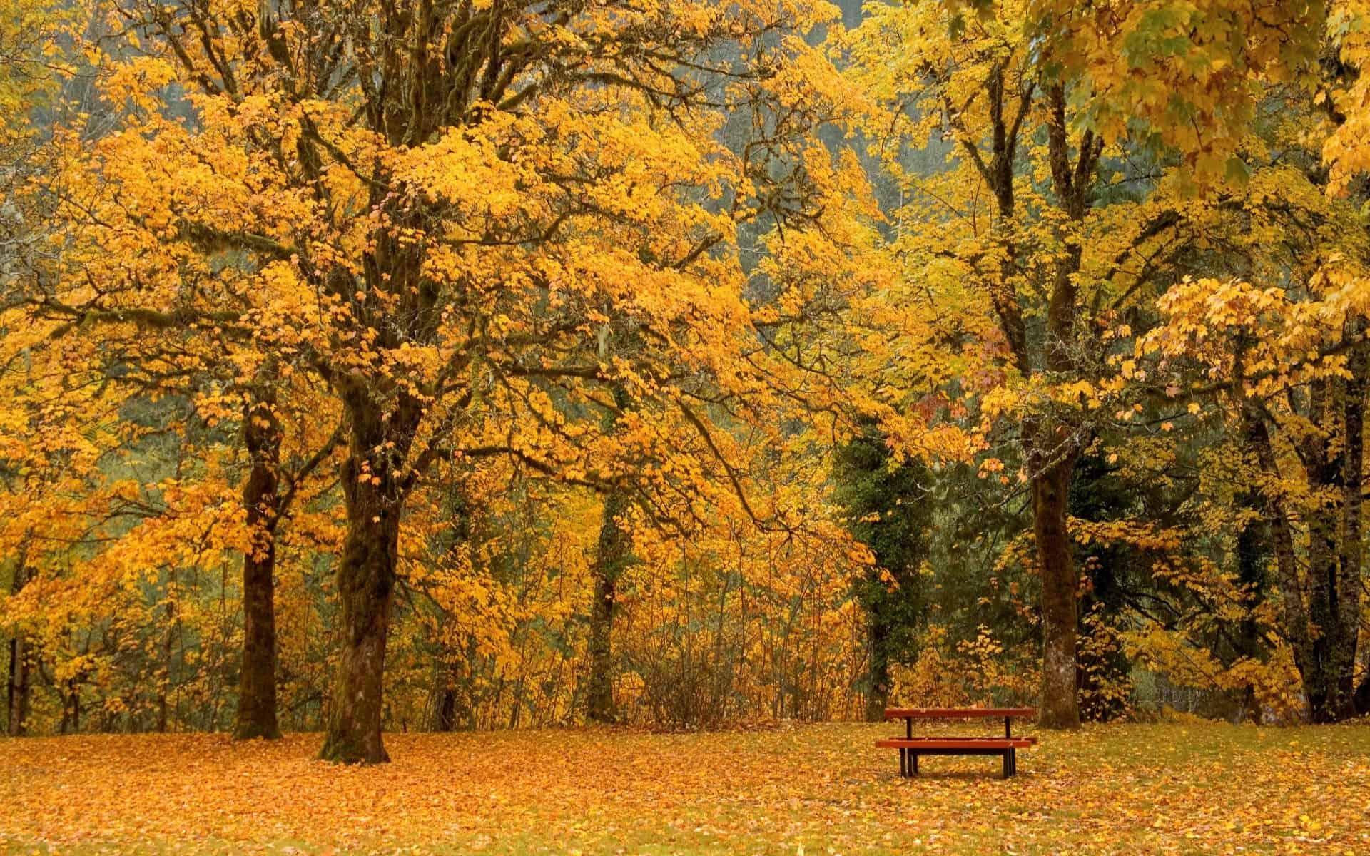 Autumn Wallpaper 008