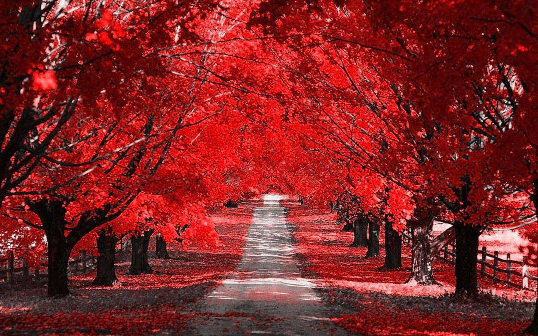 Autumn Wallpaper 011