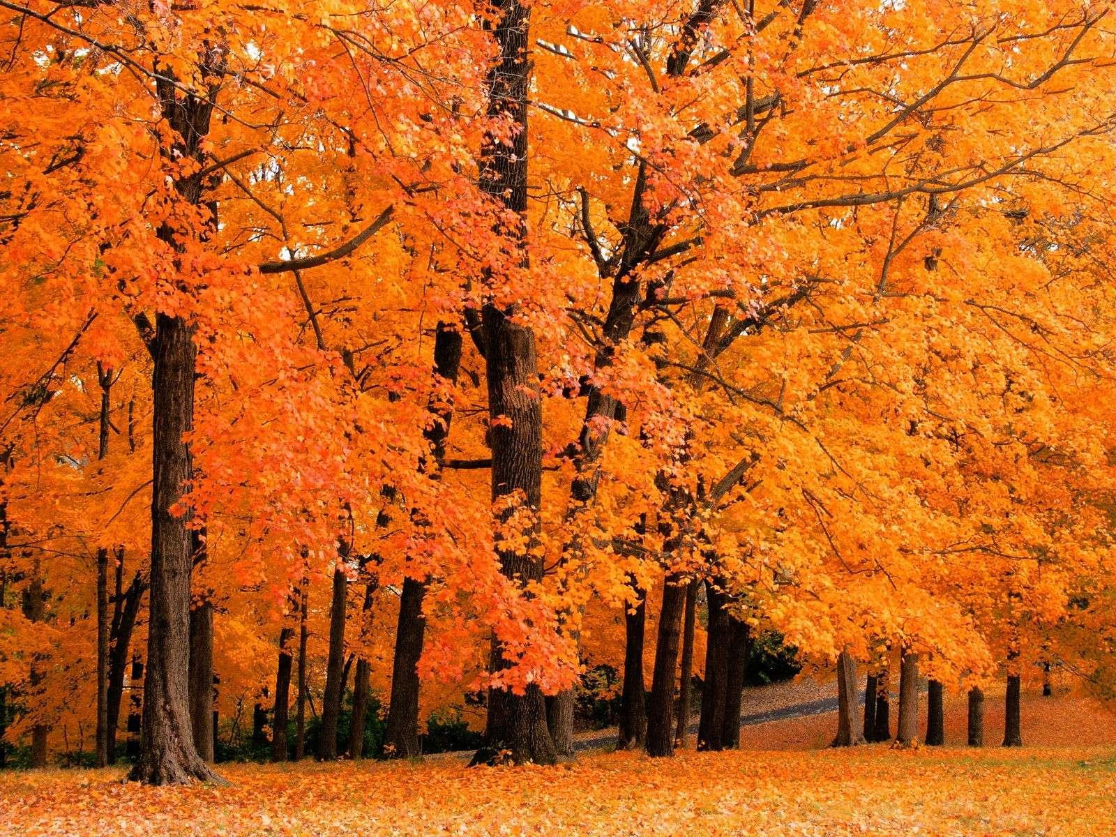 Autumn Wallpaper 019