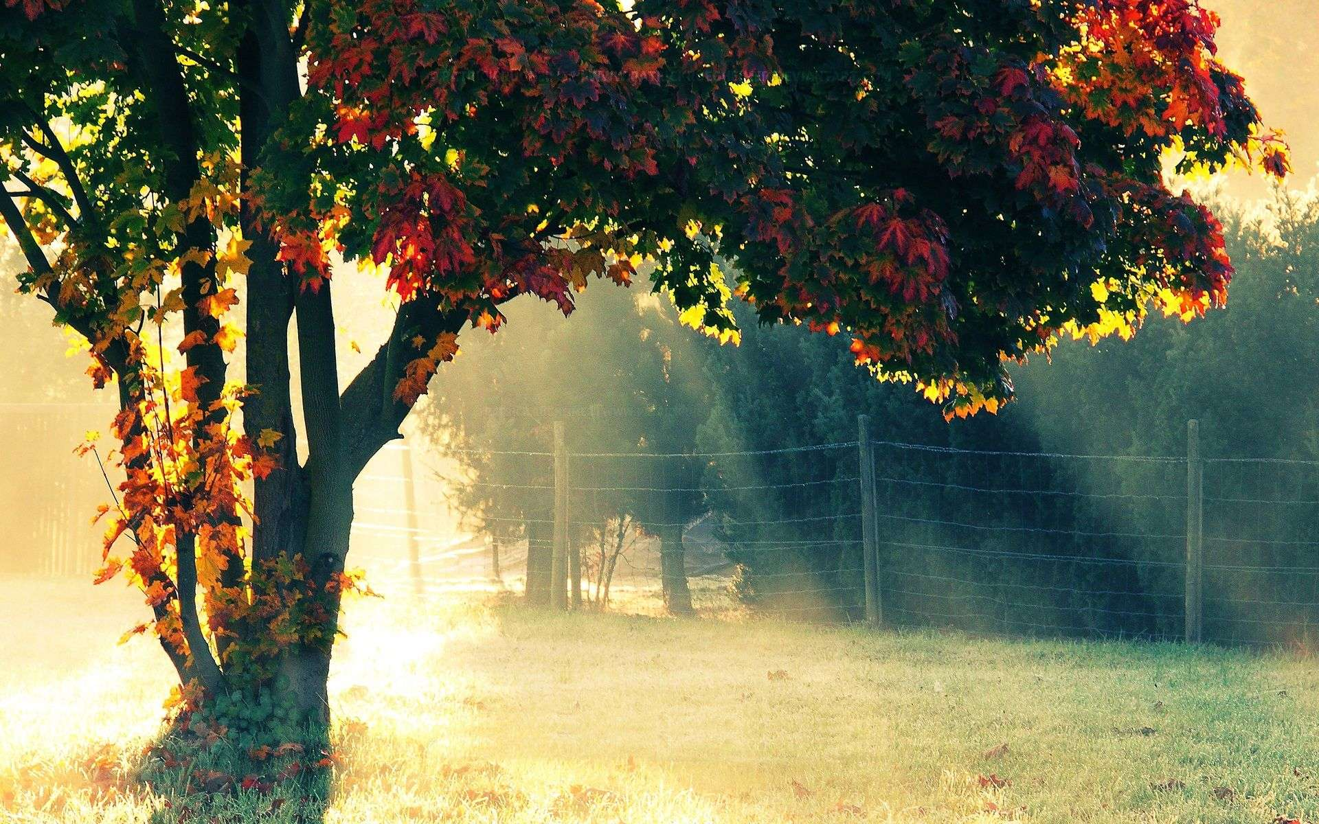 Autumn Wallpaper 026