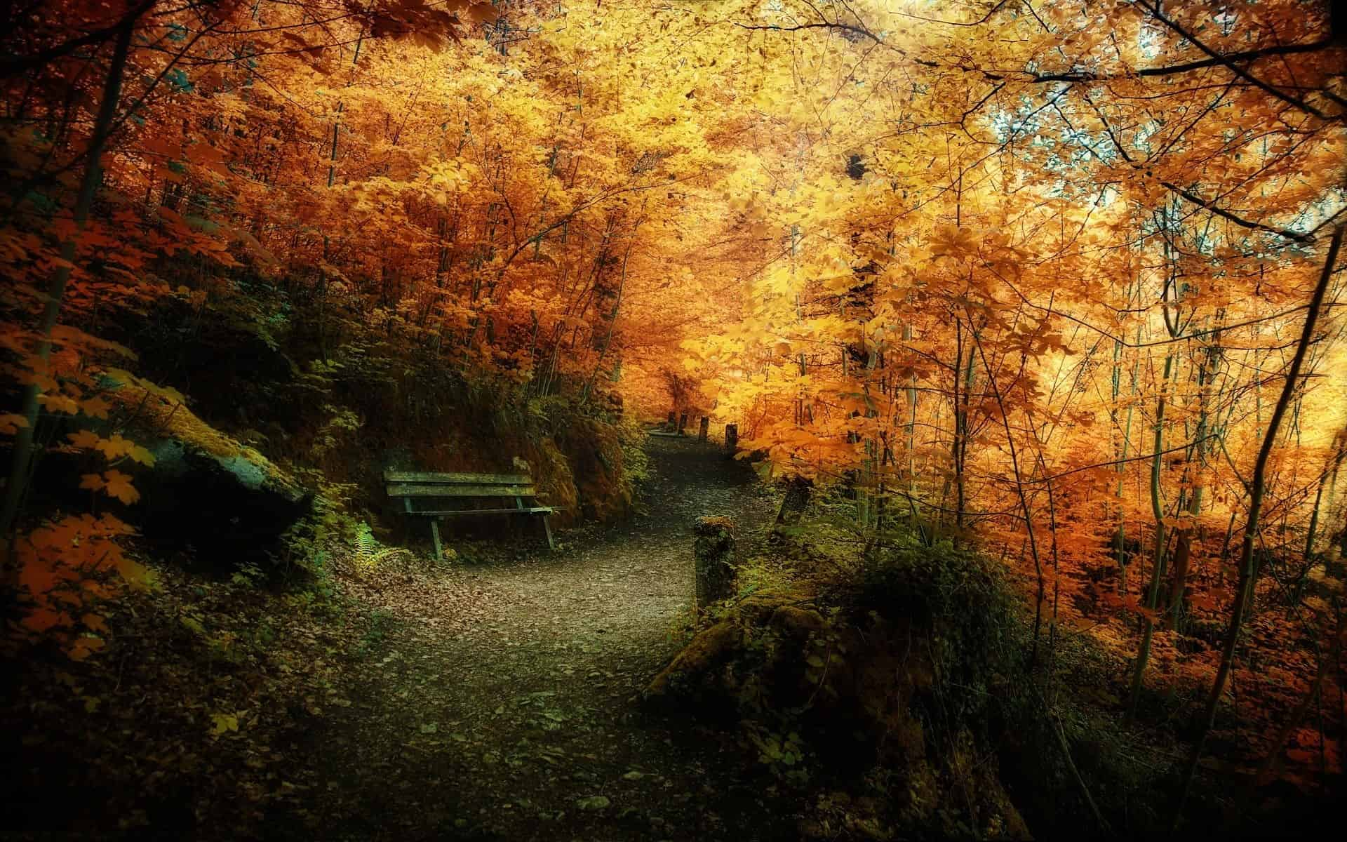 Autumn Wallpaper 028