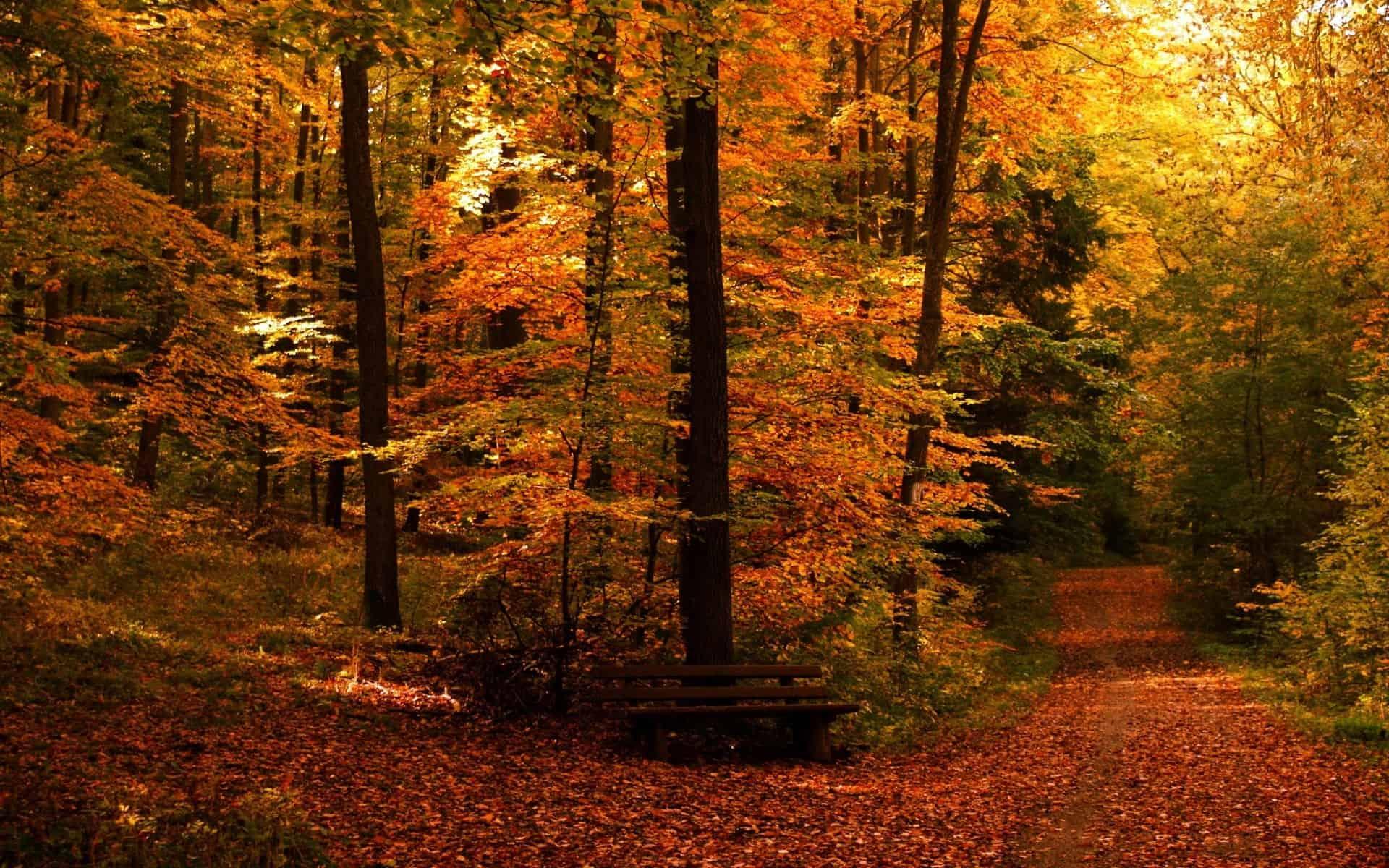 Autumn Wallpaper 037