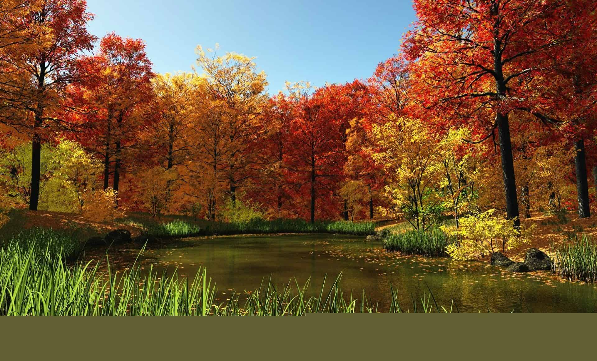 Autumn Wallpaper 043