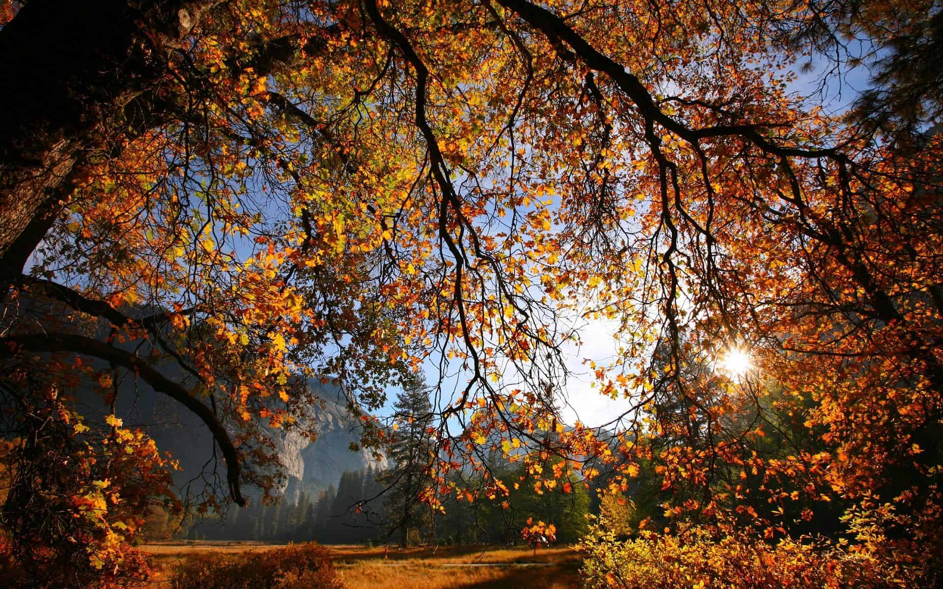 Autumn Wallpaper 045