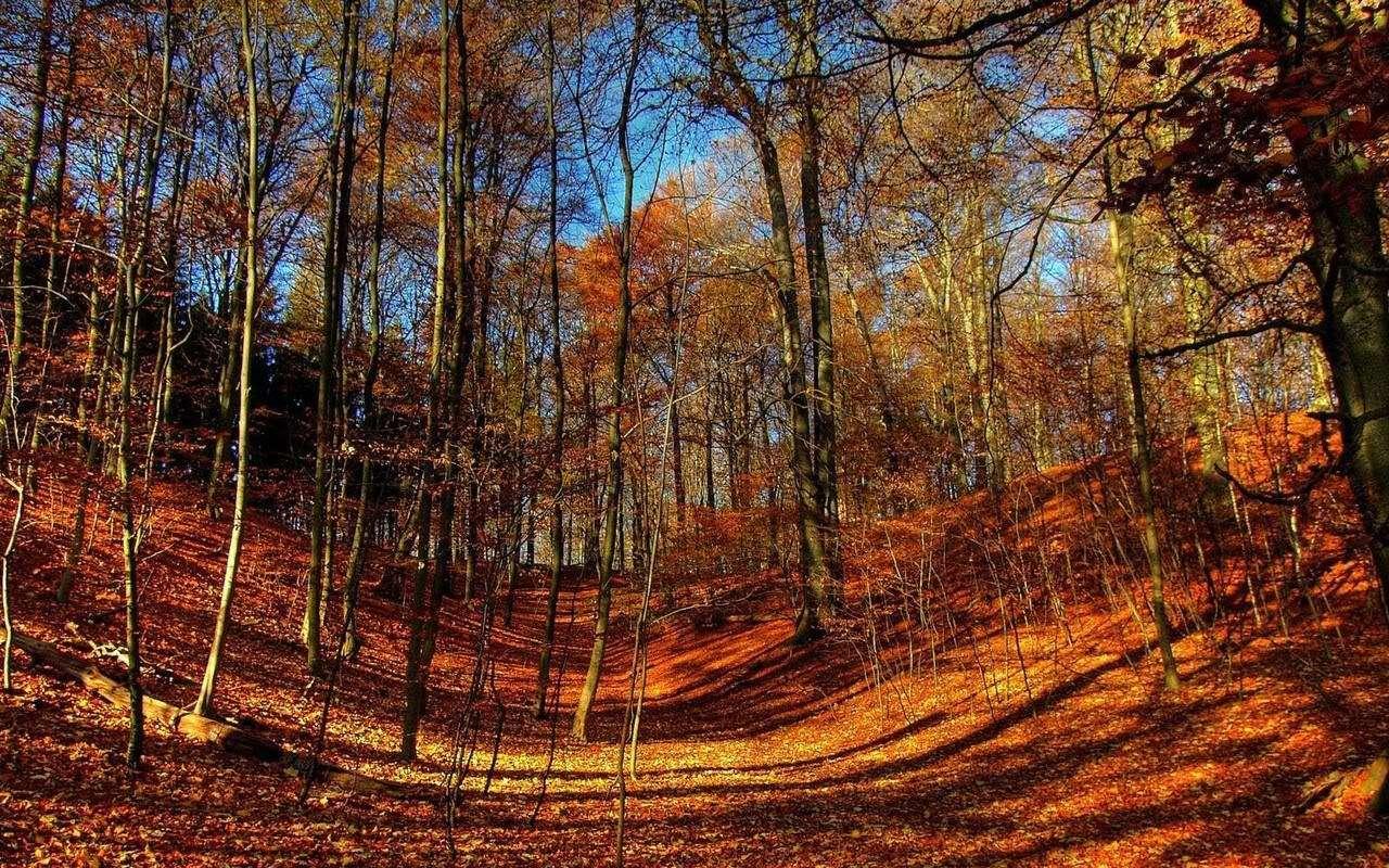 Autumn Wallpaper 055