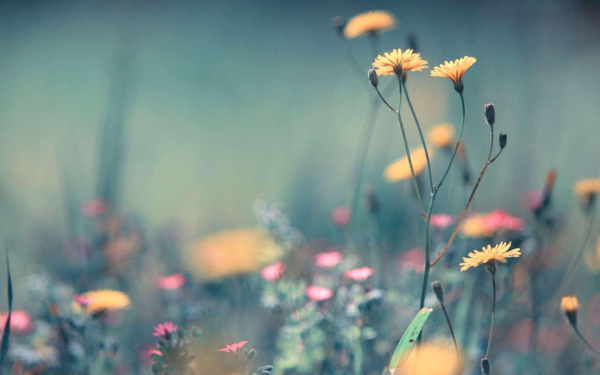 Flower Wallpaper 005