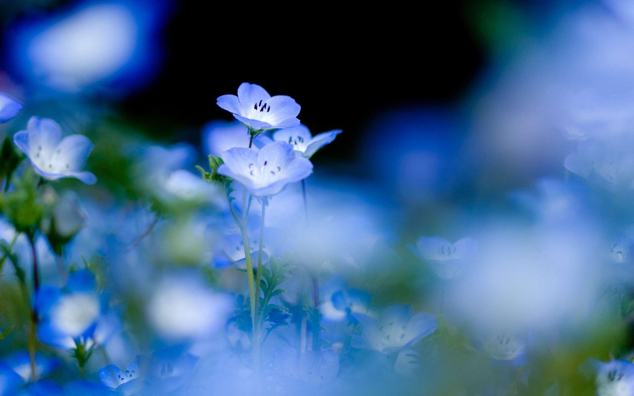Flower Wallpaper 012