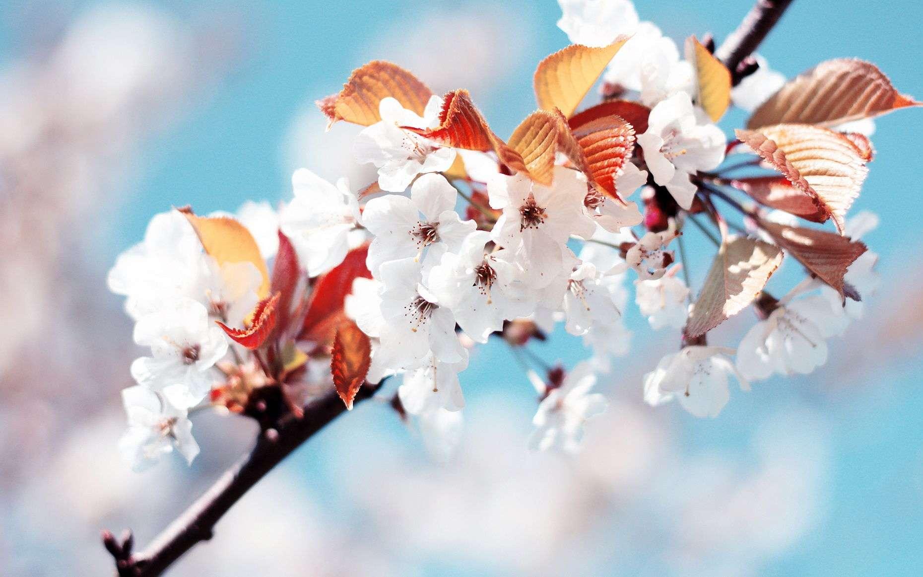 Flower Wallpaper 016