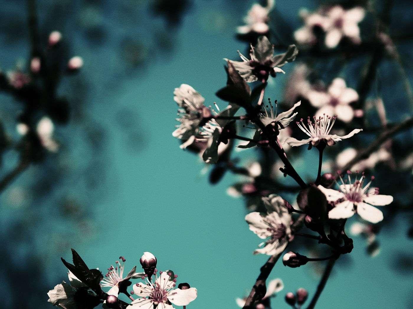 Flower Wallpaper 024