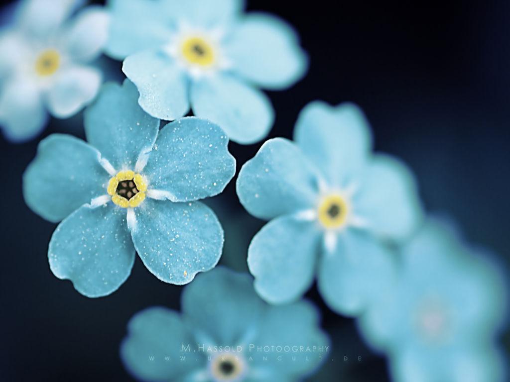 Flower Wallpaper 031